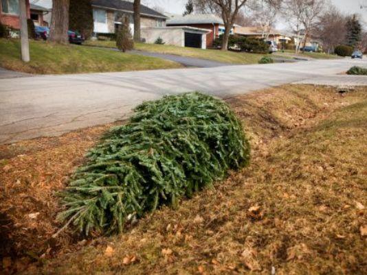 wbir.com | Knox County offers Christmas tree recycling