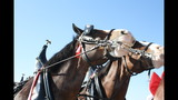 Budweiser Clydesdales make appearance at Smoky Mountain Air Show
