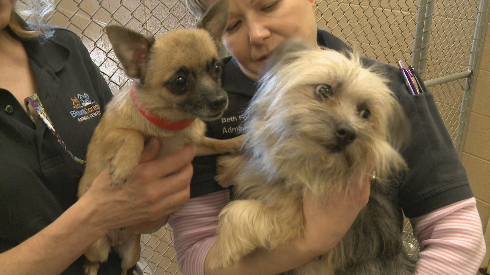 dogs rescued from house fire finding new homes